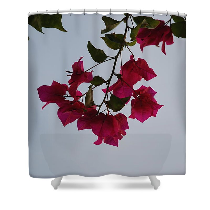 Flowers Shower Curtain featuring the photograph Flowers In The Sky by Rob Hans