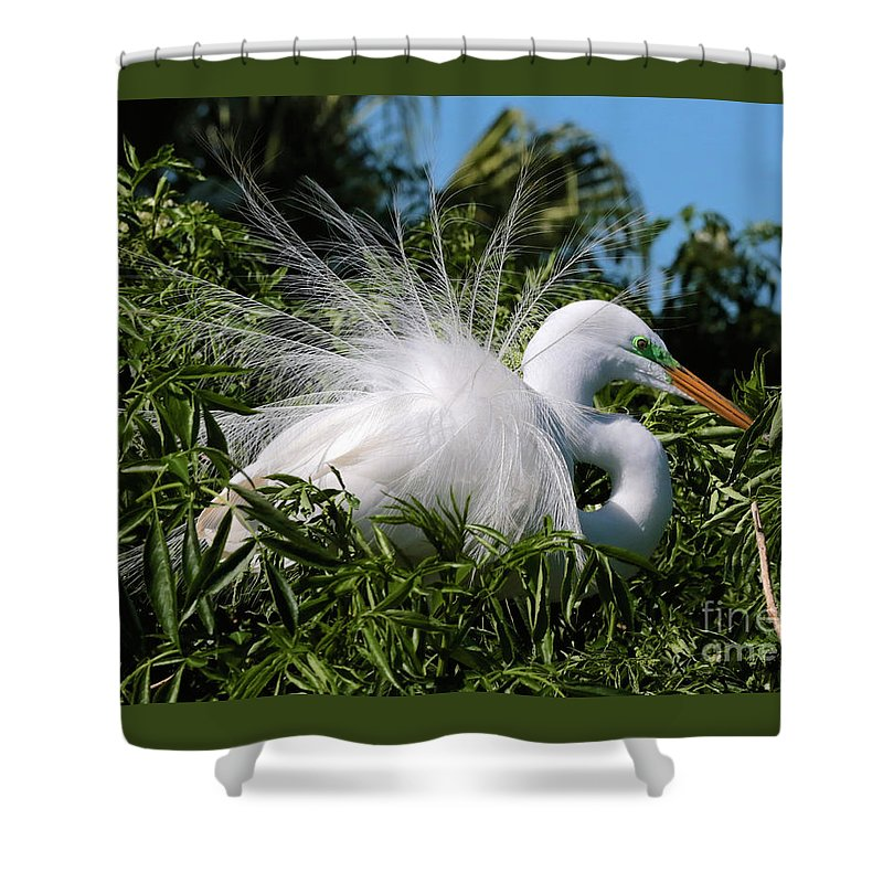 Egret Shower Curtain featuring the photograph Fluffy Great Egret by Carol Groenen