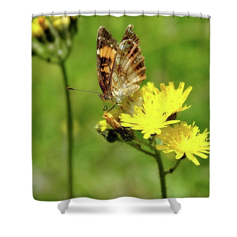 Butterfly Shower Curtain featuring the photograph Flutterby by RM Ross