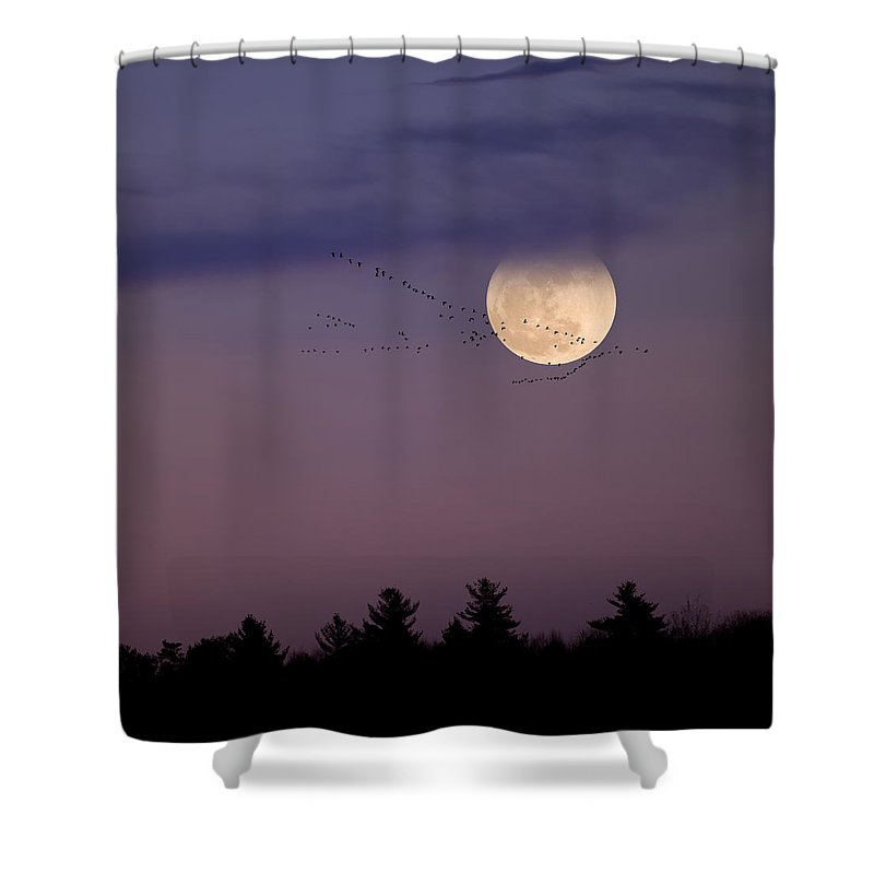 Square Shower Curtain featuring the photograph Fly By Night Square by Bill Wakeley