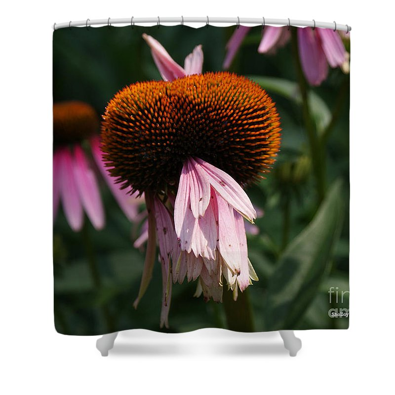 Floral Shower Curtain featuring the photograph Fly Eyes by Shelley Jones