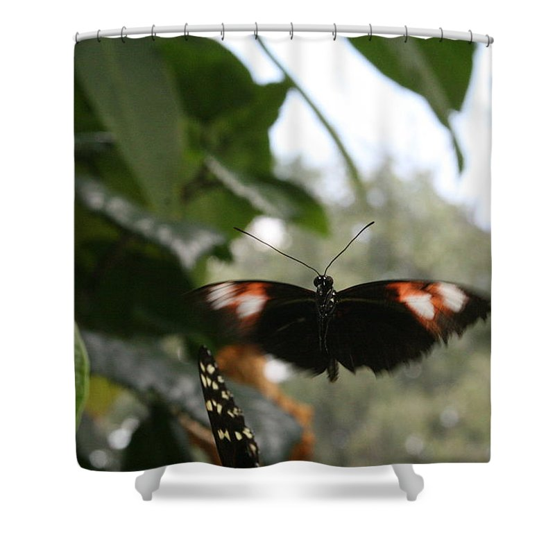 Black Shower Curtain featuring the photograph Fly Free - Black, Orange, White Butterfly by Lynn Michelle
