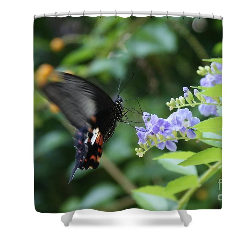Butterfly Shower Curtain featuring the photograph Fly In Butterfly by Shelley Jones