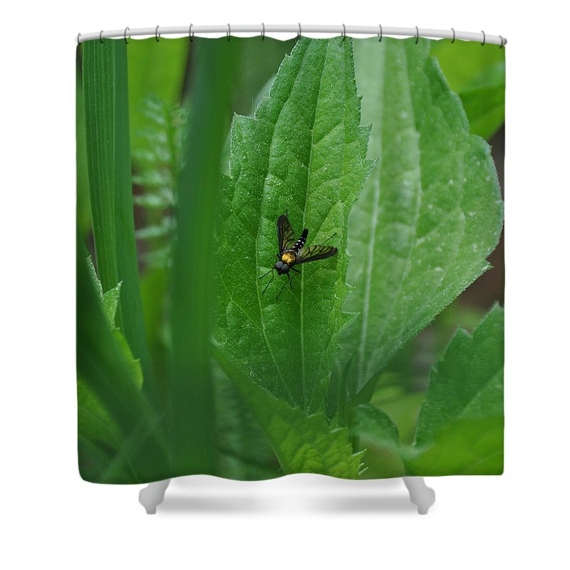Fly Shower Curtain featuring the photograph Fly by Rich Bodane