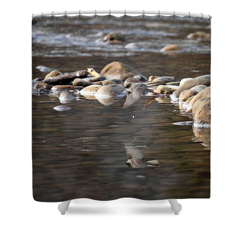 Flycatcher Shower Curtain featuring the photograph Flycatcher Hunting On The Buffalo River by Michael Dougherty