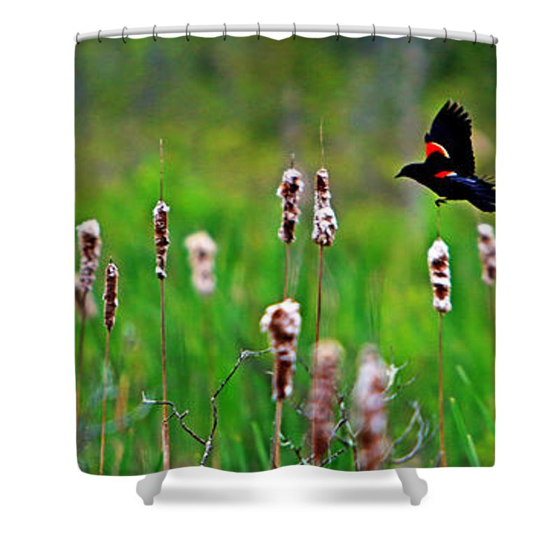 Sun Shower Curtain featuring the photograph Flying Amongst Cattails by James F Towne
