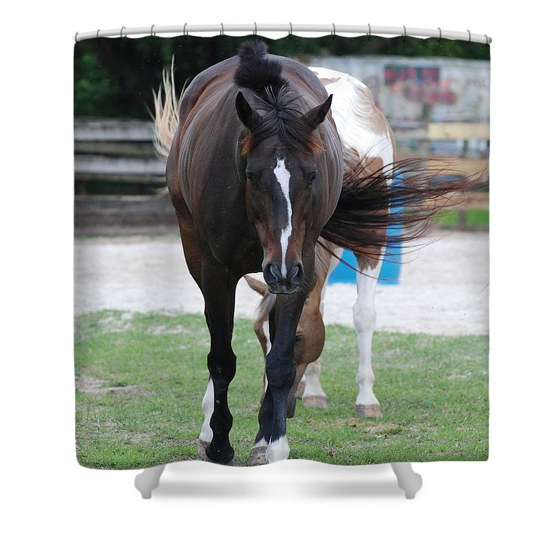 Horses Shower Curtain featuring the photograph Flying Circus by Rob Hans