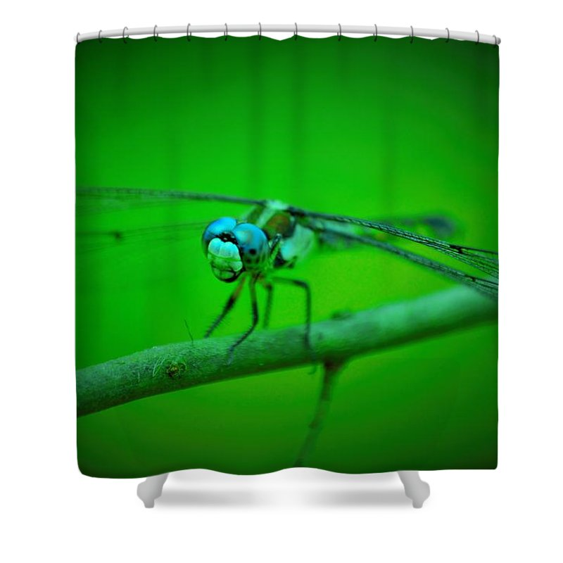 Insect Shower Curtain featuring the photograph Flying Dragon by Francis Palladino