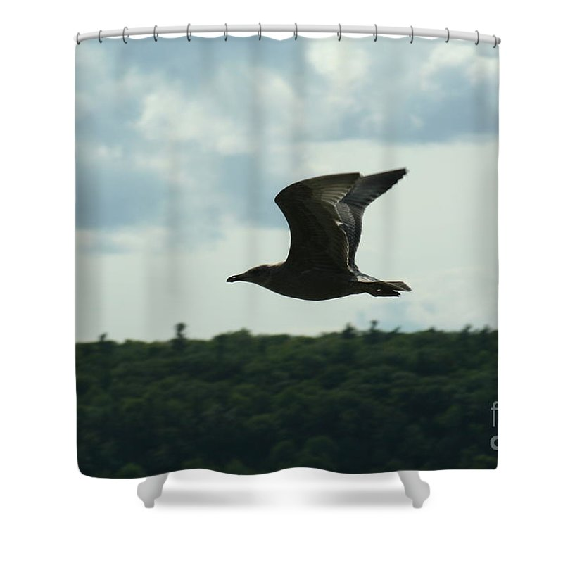 Ephraim Shower Curtain featuring the photograph Flying Ephraim Wi by Tommy Anderson