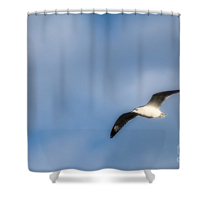 Gull Shower Curtain featuring the photograph Flying High by Karin Everhart