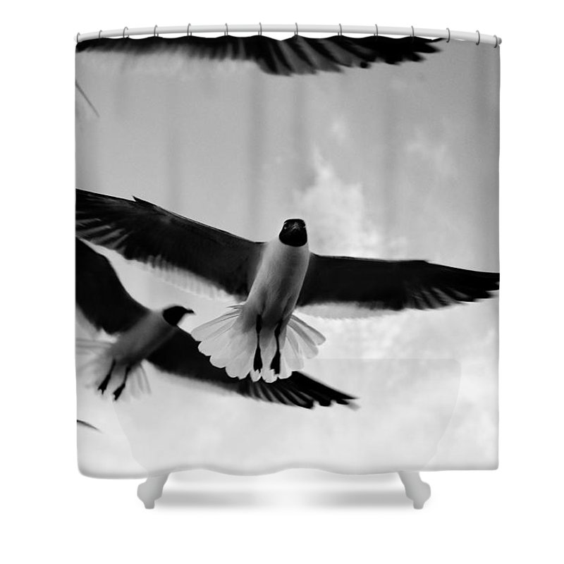 Bird Shower Curtain featuring the photograph Flying High by Marilyn Hunt