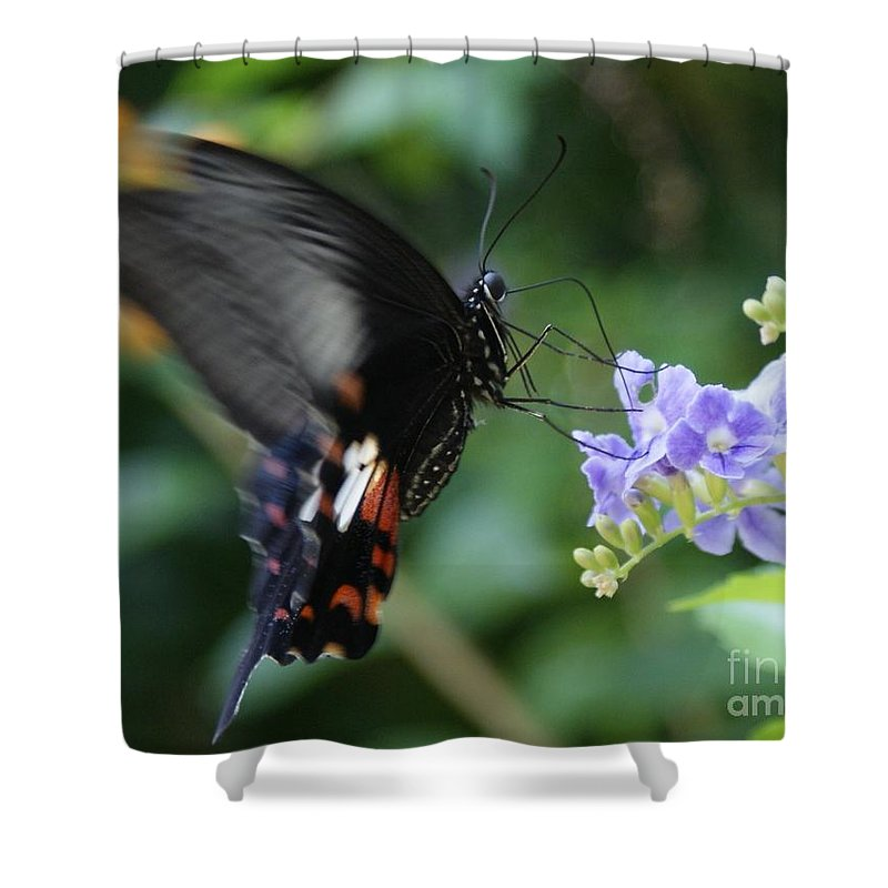 Butterfly Shower Curtain featuring the photograph Flying In close up by Shelley Jones