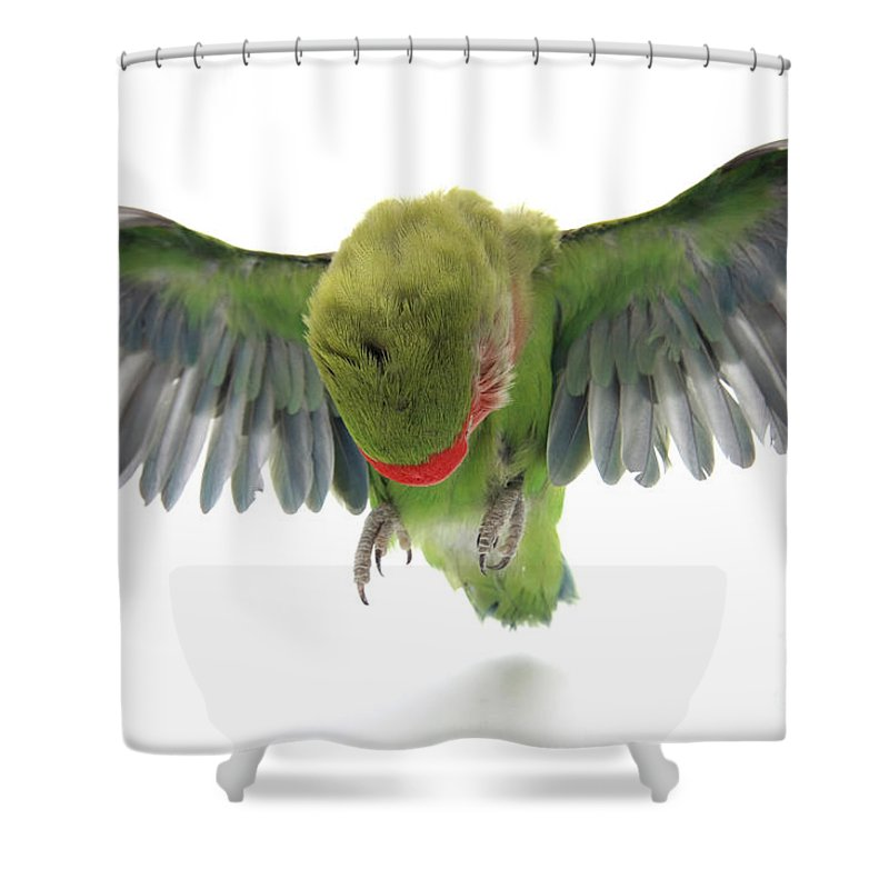 Fly Shower Curtain featuring the photograph Flying Parrot by Yedidya yos mizrachi