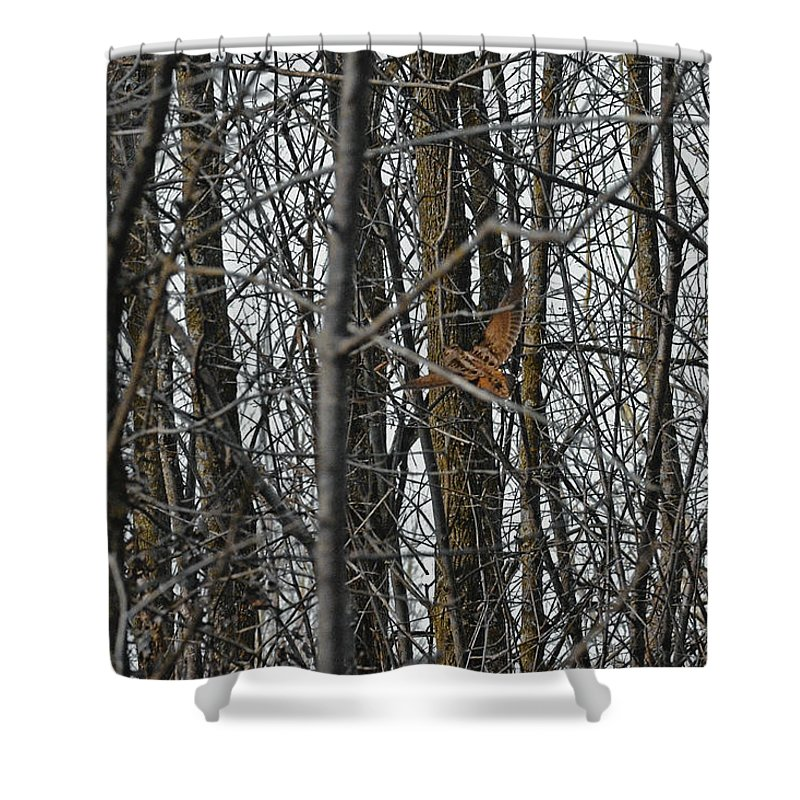 American Woodcock Shower Curtain featuring the photograph Flying Through The Trees Of The Forest by Asbed Iskedjian