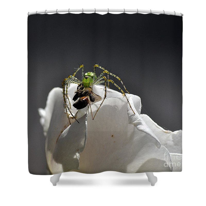 Clay Shower Curtain featuring the photograph Flys At The Picnic by Clayton Bruster
