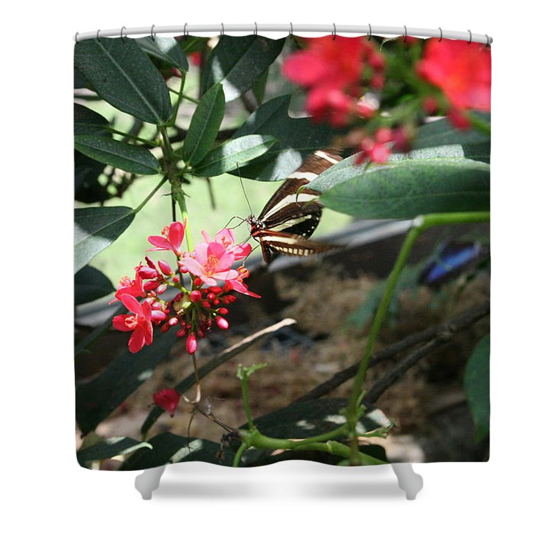Black Shower Curtain featuring the photograph Focus In The Center - Black And White Butterfly by Lynn Michelle