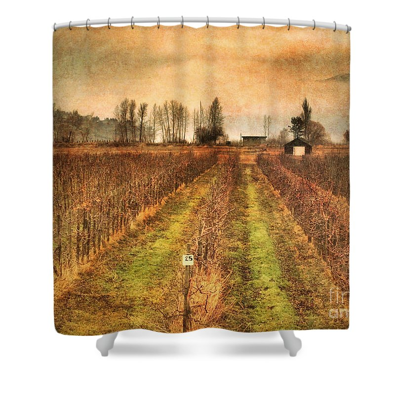 Vineyard Shower Curtain featuring the photograph Foggy Afternoon On Highway 97 by Tara Turner
