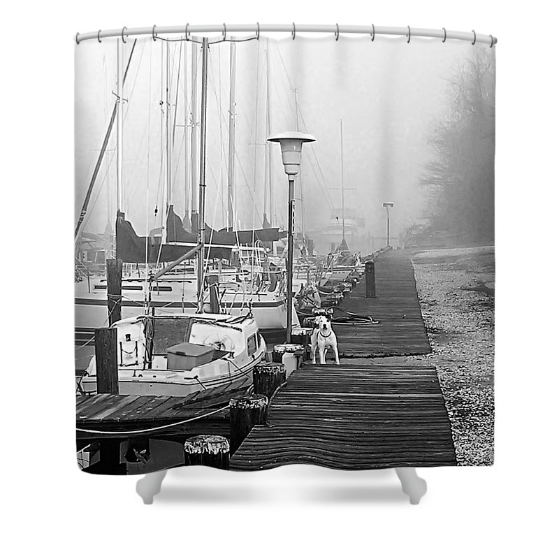 2d Shower Curtain featuring the photograph Foggy Doggy by Brian Wallace