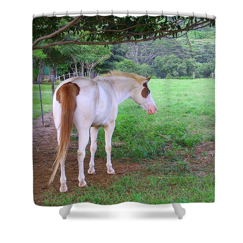 White Horse Shower Curtain featuring the photograph Follow Me by Mary Deal