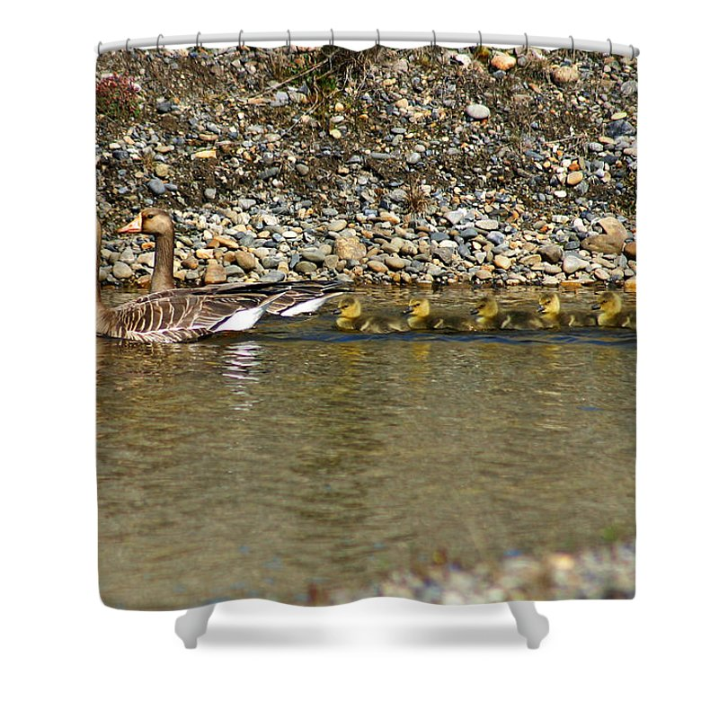 Ducks Shower Curtain featuring the photograph Follow The Leader by Anthony Jones