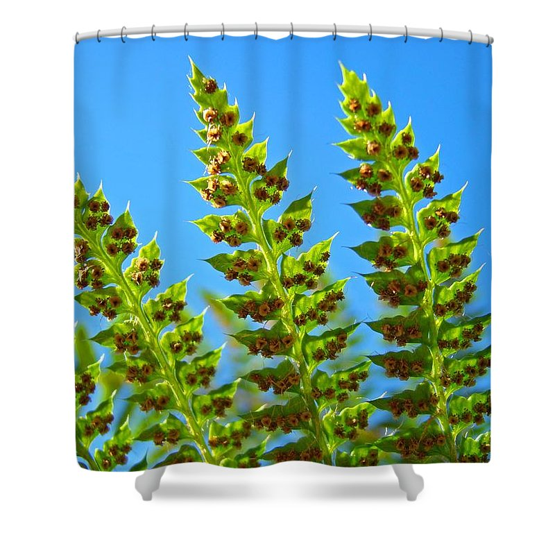 Fern Shower Curtain featuring the photograph Forest Ferns Art Prints Blue Sky Botanical Baslee Troutman by Baslee Troutman