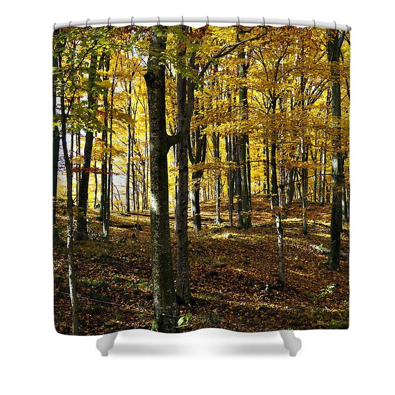 Autumn Shower Curtain featuring the photograph Forest Floor by Tim Nyberg