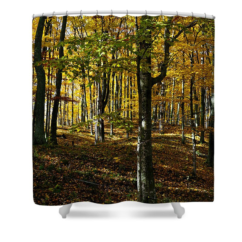 Autumn Shower Curtain featuring the photograph Forest Floor Two by Tim Nyberg