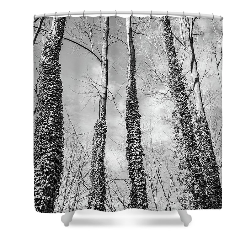 Trees Shower Curtain featuring the photograph Forest by Margaret Koc