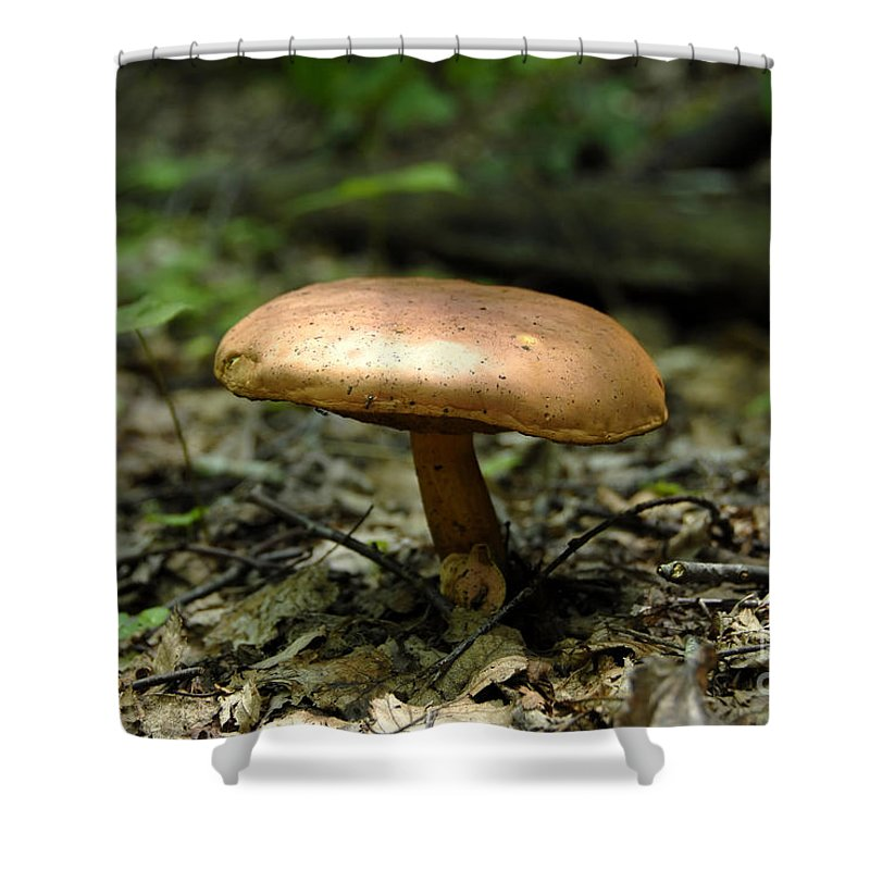 Forest Shower Curtain featuring the photograph Forest Mushroom by David Lee Thompson