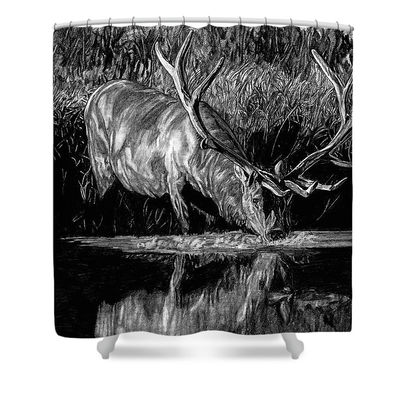 Elk Shower Curtain Featuring The Drawing Forest Royal Bull By Dan Pearce