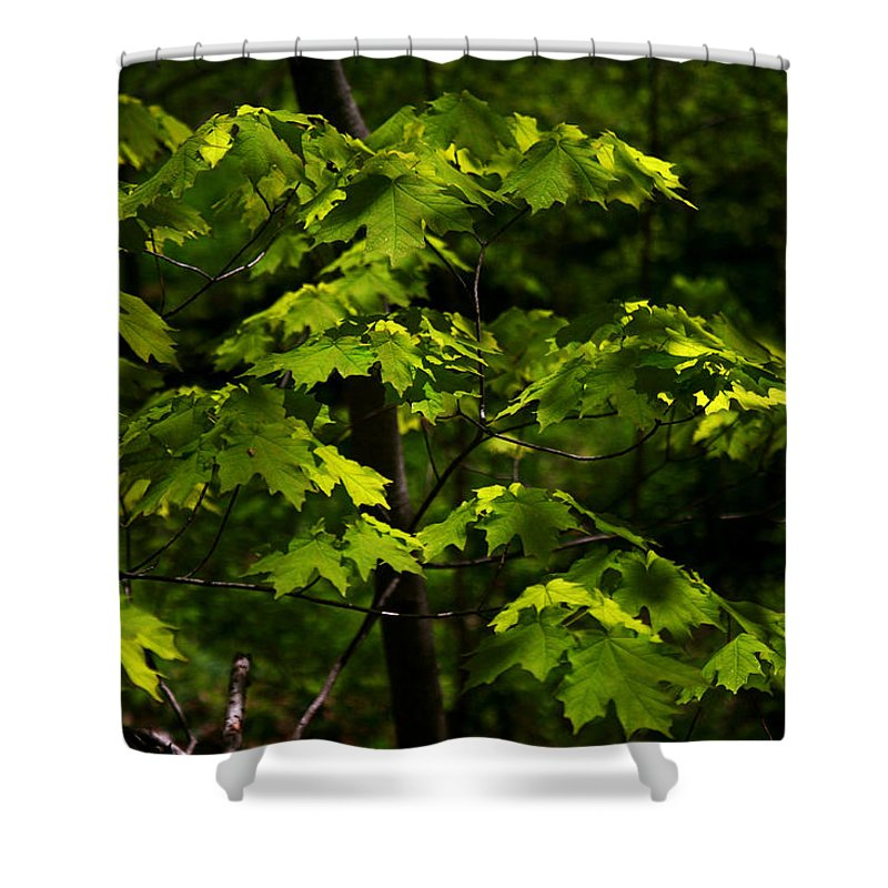 Forest Shower Curtain featuring the photograph Forest Shades by Randy Oberg