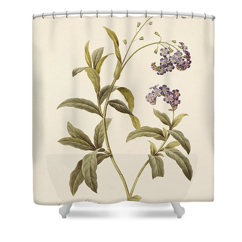 Forget-me-not Shower Curtain featuring the drawing Forget Me Not by Pierre Joseph Redoute