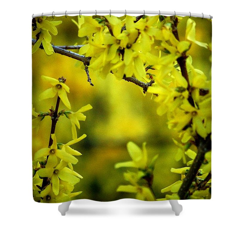 Spring Shower Curtain featuring the photograph Forsythia At The Hacienda by David Lane
