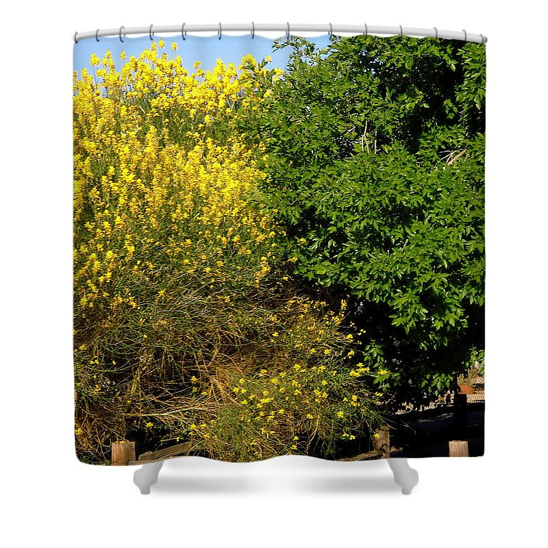 Forsythia Shower Curtain featuring the photograph Forsythia by Stephanie Moore