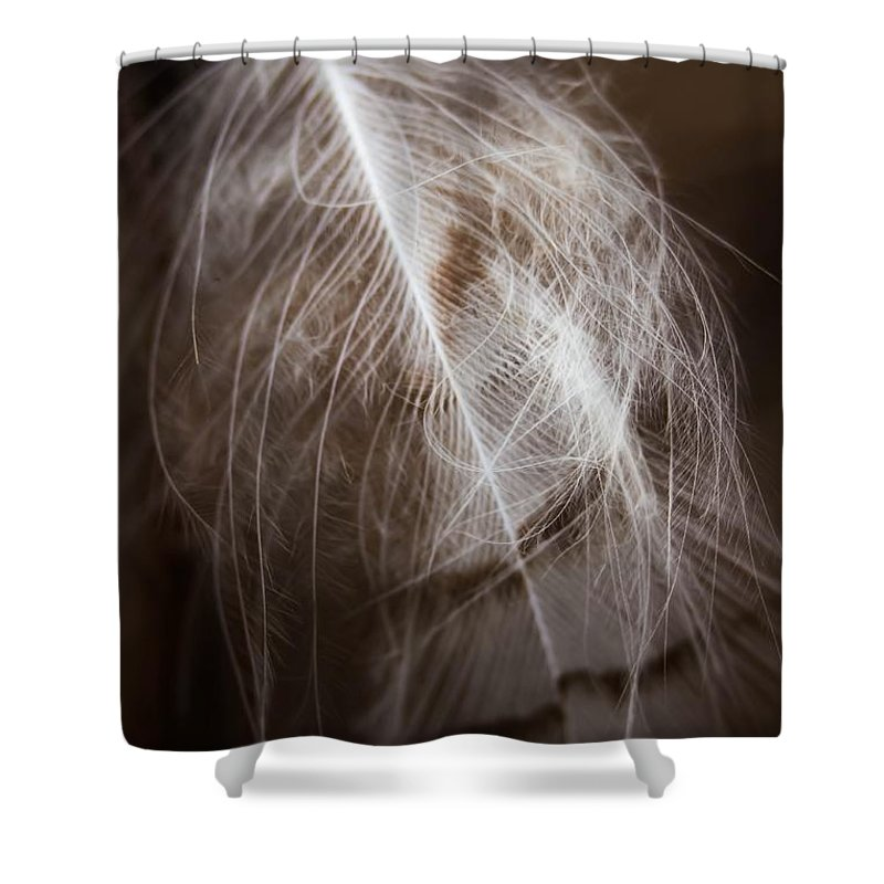 Feather Shower Curtain featuring the photograph Found Feather by Jeanette Fellows