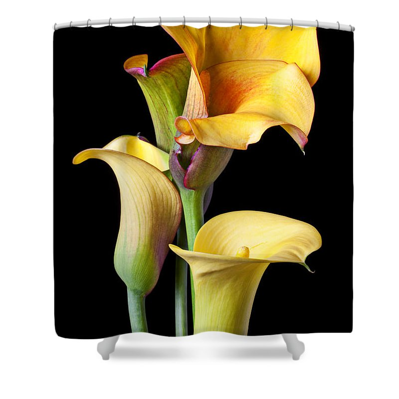 Calla Lily Shower Curtain Featuring The Photograph Four Lilies By Garry Gay