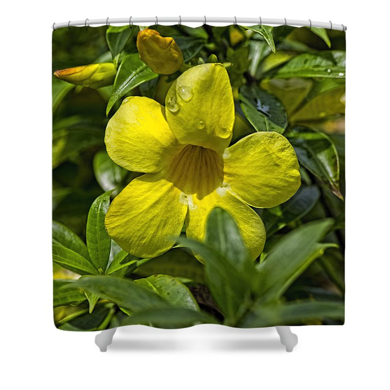 Flowers Shower Curtain featuring the photograph Four Drops by Richard Gripp