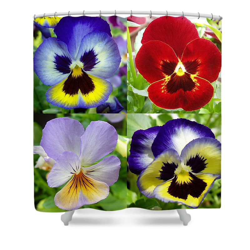 Pansy Shower Curtain featuring the photograph Four Pansies by Nancy Mueller