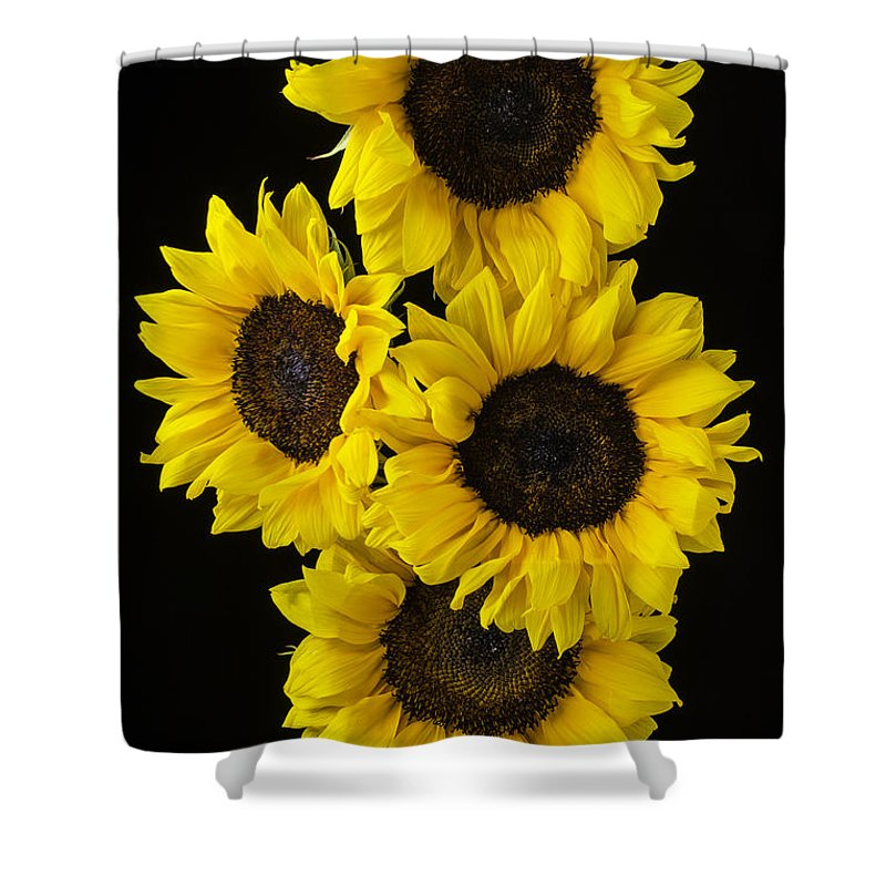 Vertical Shower Curtain featuring the photograph Four Sunny Sunflowers by Garry Gay