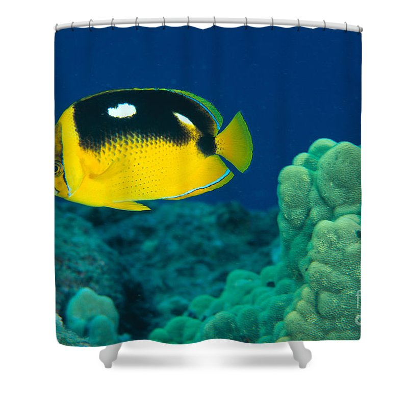 Animal Art Shower Curtain featuring the photograph Fourspot Butterflyfish by Ed Robinson - Printscapes