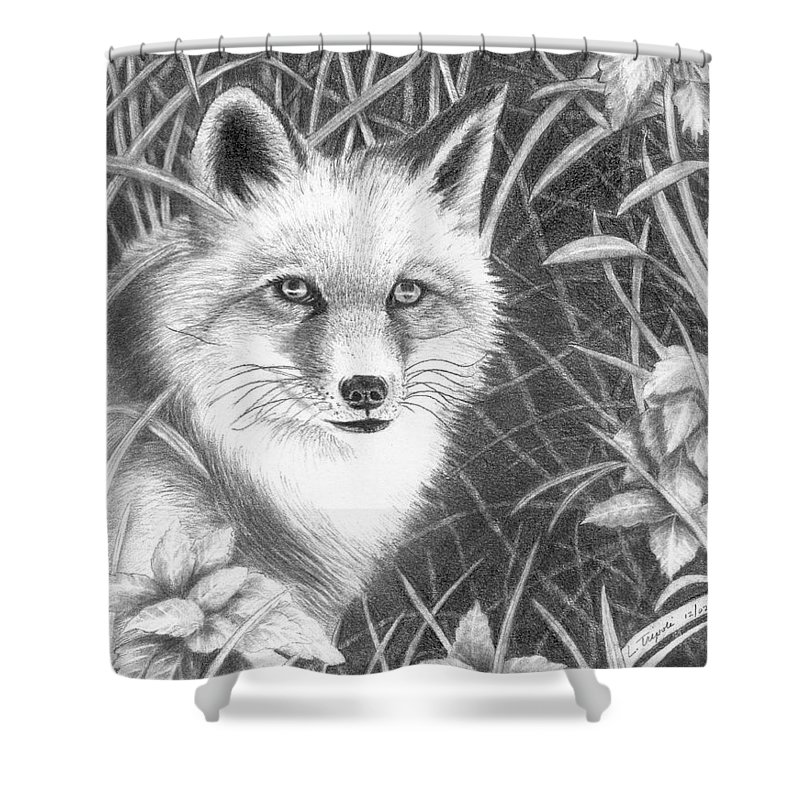 Wildlife Shower Curtain featuring the drawing Fox by Lawrence Tripoli