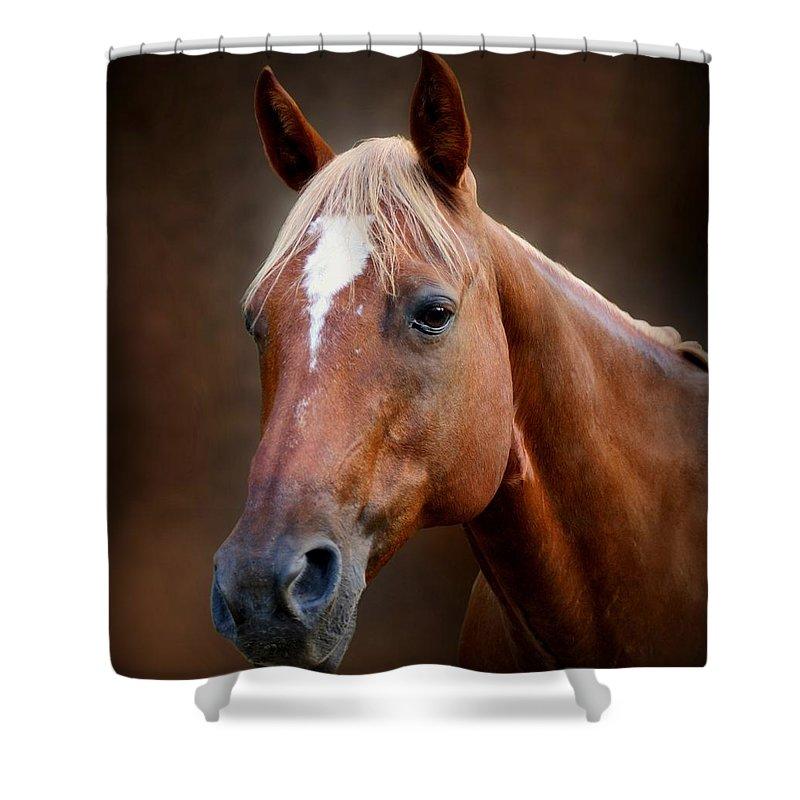 Horse Shower Curtain featuring the photograph Fox - Quarter Horse by Sandy Keeton