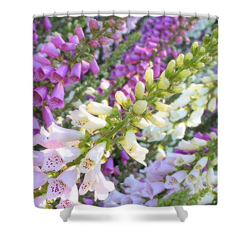 Card Shower Curtain featuring the photograph Foxglove Card by Carol Groenen