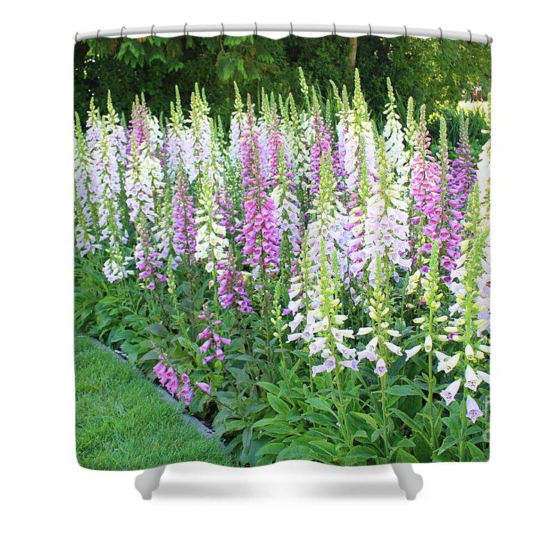 Foxglove Flowers Shower Curtain featuring the photograph Foxglove Garden by Carol Groenen