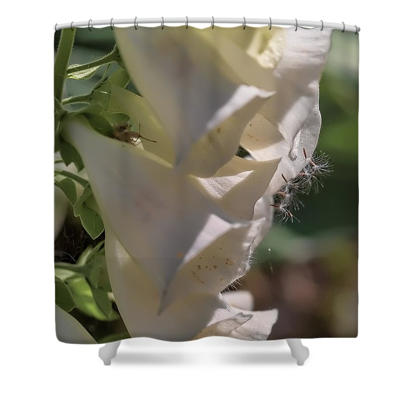 Foxglove Shower Curtain featuring the photograph Foxglove by Leif Sohlman