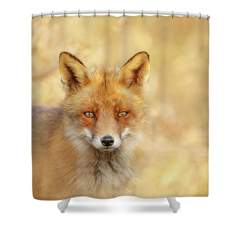 Red Fox Shower Curtain featuring the photograph Foxy Faces Series- That Look by Roeselien Raimond