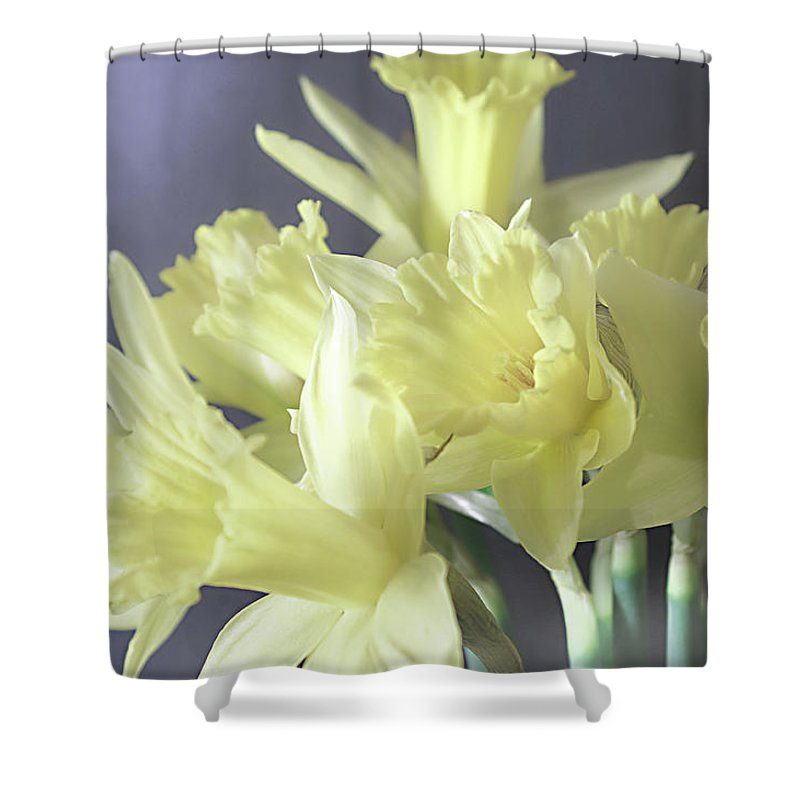 Flowers Shower Curtain featuring the photograph Fragile Daffodils by Jacqi Elmslie