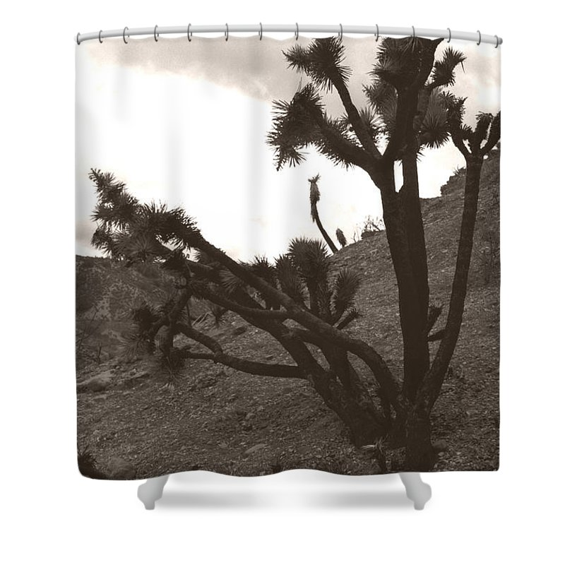 Shower Curtain featuring the photograph Framed By The Branches by Heather Kirk