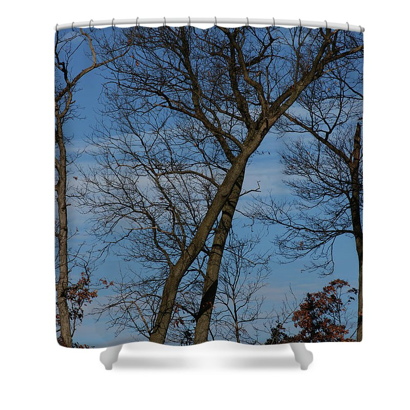 Woodland Shower Curtain featuring the photograph Framed In Oak - 2 by Linda Shafer