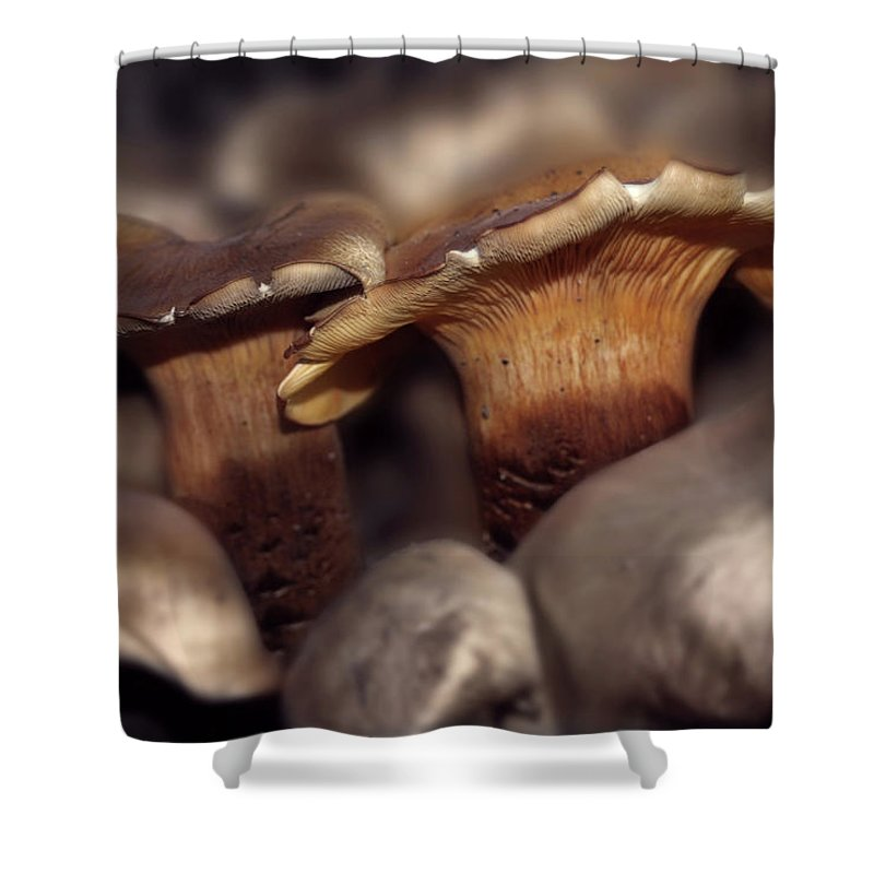 Fungi Shower Curtain featuring the photograph Fraternal Fungi by Wayne King